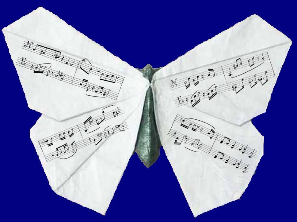 Motýl Ti prozradí souřadnice